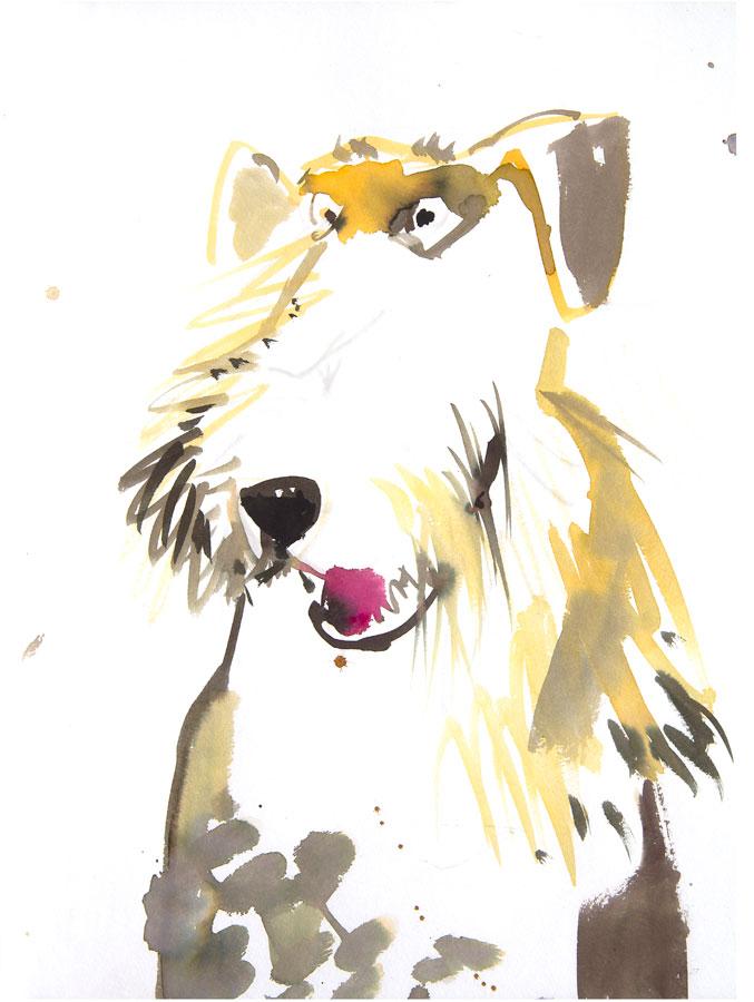 Hunde der Welt Nr. 8